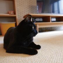 ペットと心地よく暮らせる家づくり